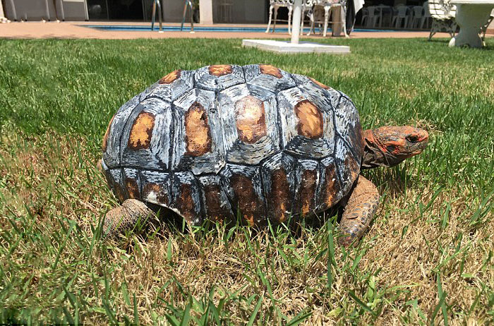 geeetechblog-tortoise-3d-printed-shell-freddy-4