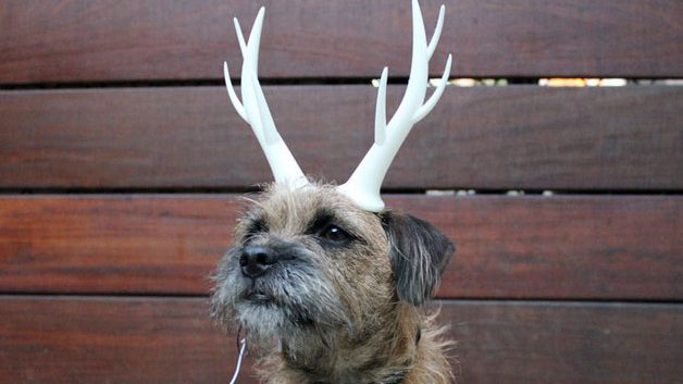 Dog carry 3D printed antlers
