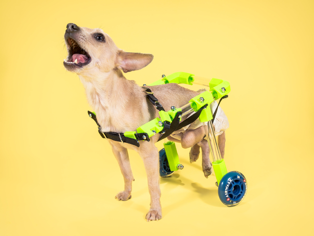 pet wheelchairs can be printed that helps your pet to walk