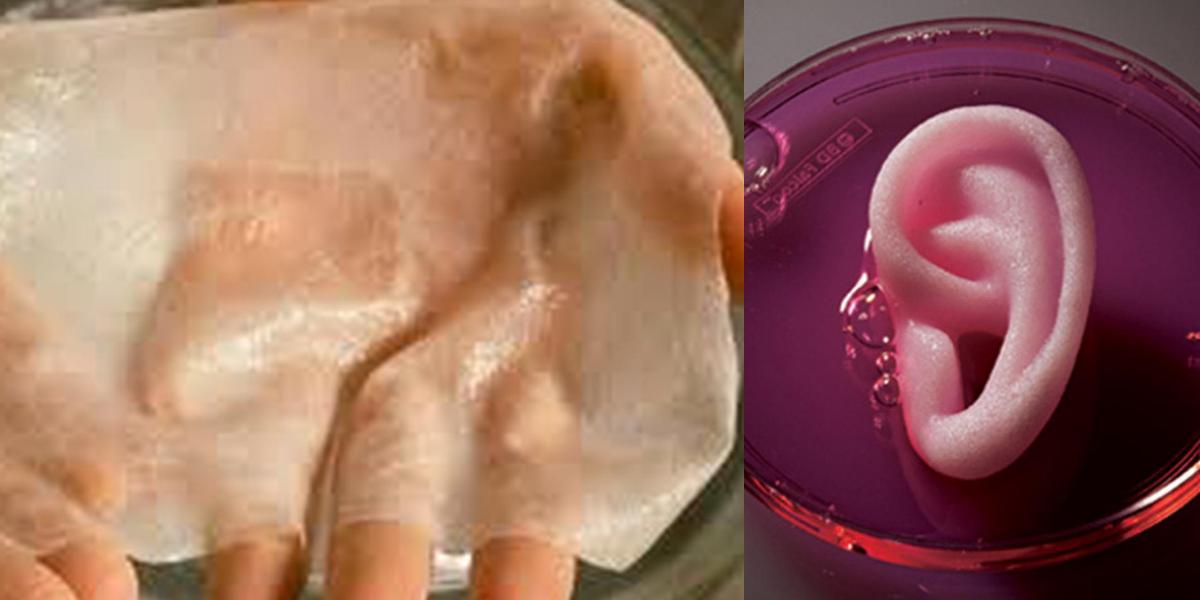 Bioprinting skin & ear
